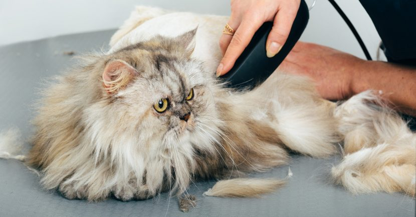 Finding the Top Miami Grooming Services for the Pet