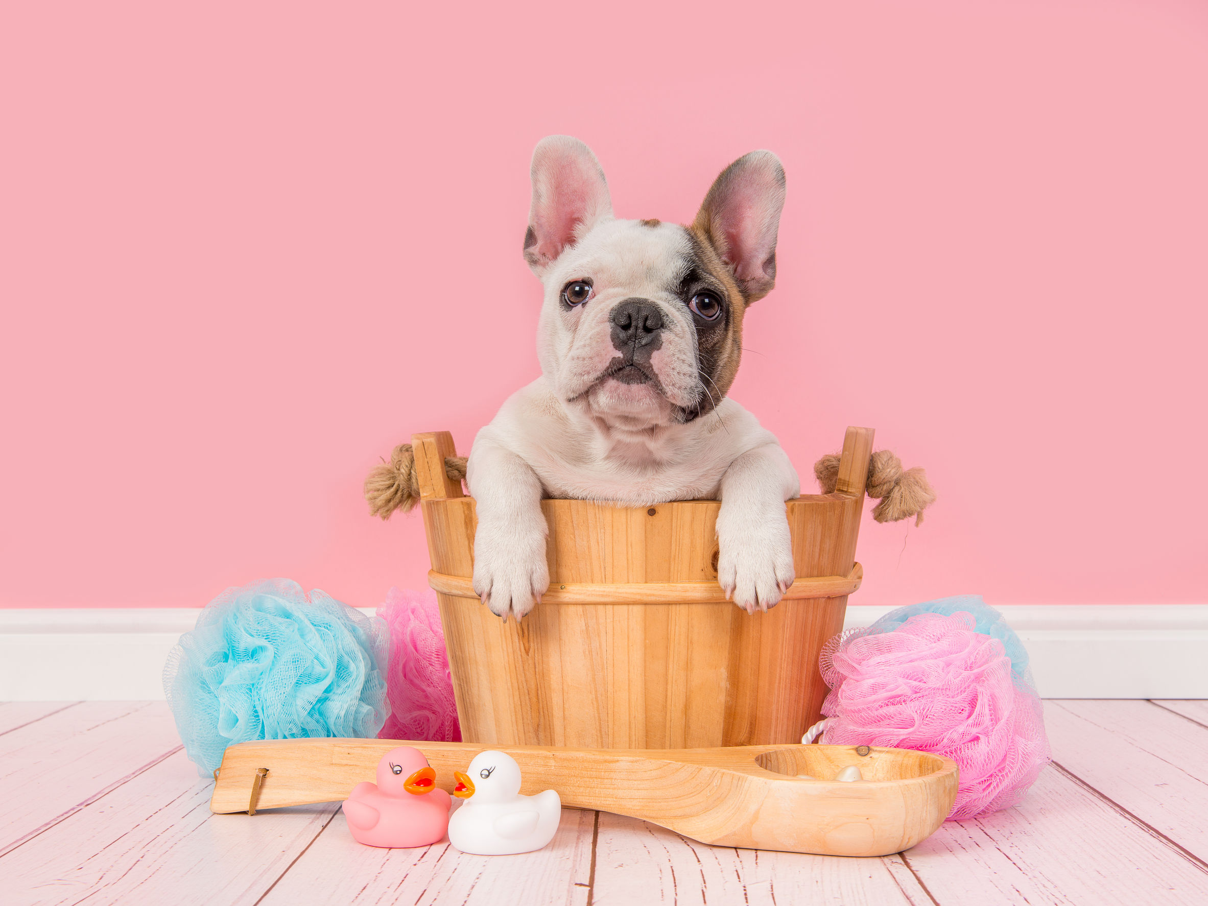 What are some benefits of grooming your pets?
