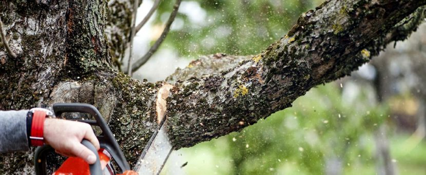 How to judge a tree service?