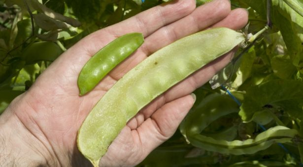 Different Ways of Using Peas & Pods