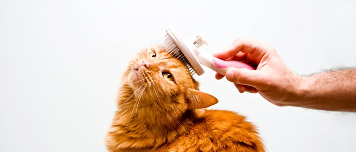 Cat groomers Miami is best for your cats!